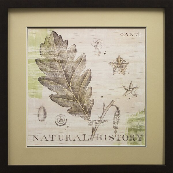 Natural History Oak III Framed Graphic Art Print in Black by Star Creations