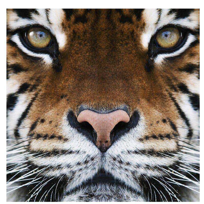 East Urban Home A Tiger's Eyes Semi-Gloss Wallpaper