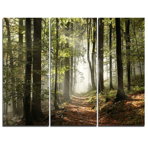 Green Fall Forest with Sun Rays - 3 Piece Photographic Print on Wrapped Canvas Set by Design Art