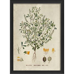 Botanical Melitous Parviflorus Framed Graphic Art by The Artwork Factory