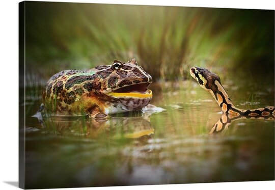Face to Face by Shikhei Goh Photographic Print on Canvas by Canvas On Demand