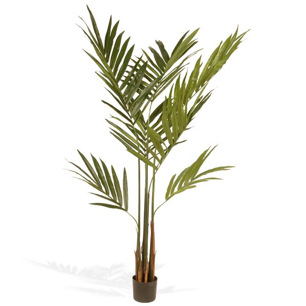 Kentia Palm Tree in Pot by National Tree Co.