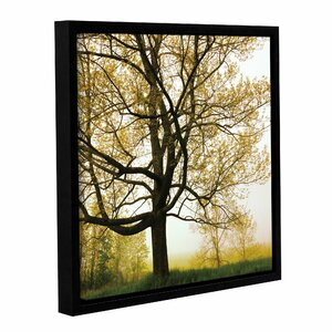 Morning Tree Framed Photographic Print on Wrapped Canvas by Loon Peak