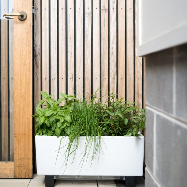 Self-Watering Plastic Planter Box by Glowpear