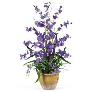 Dancing Lady Orchid Flowers in Purple with Pot