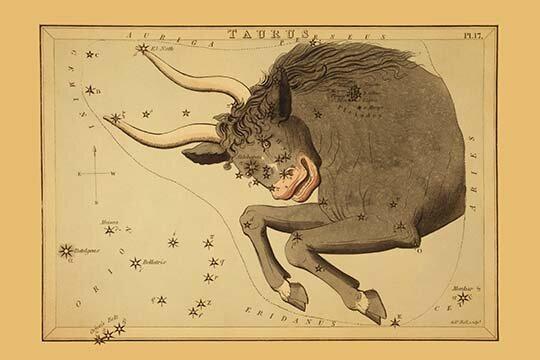 Taurus the Bull Antique Print