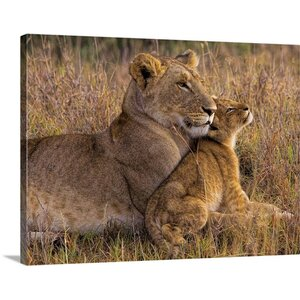 'Baby Lion' with Mother by Henry Jager Photographic Print on Canvas by Great Big Canvas
