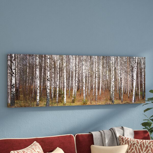 Birch Trees in a Forest Framed Photo Graphic Print on Canvas by Three Posts