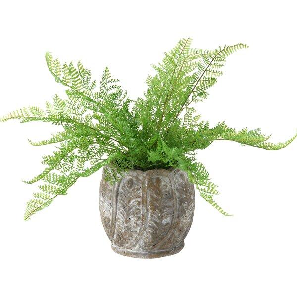 Lace Fern Foliage Plant in Planter by D & W Silks