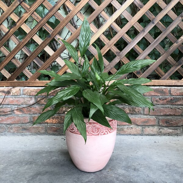 Newlyn Tall Fancy Rim Pot Planter by Charlton Home