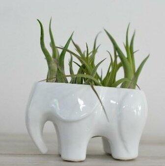 Bailey Elephant Ceramic Pot Planter by Ivy Bronx