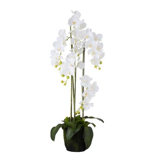 2 Artificial Orchid Plant in Planter Set Willa Arlo Interior