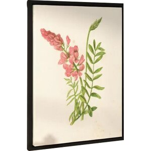 Saintfoin onobrychis Sativa Graphic Art on Wrapped Canvas by Laurel Foundry Modern Farmhouse