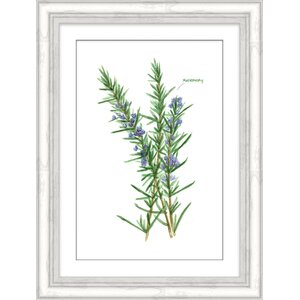 'Rosemary Herb' Framed Watercolor Painting Print by Gracie Oaks