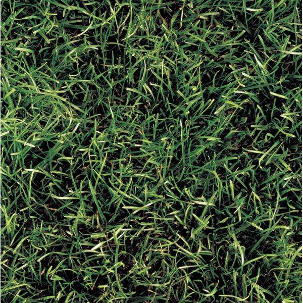 Grass 8 x 8 Ceramic Field Tile