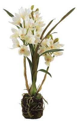 Cymbidium Drop Orchid Floral Arrangement in Plant by Bay Isle Home