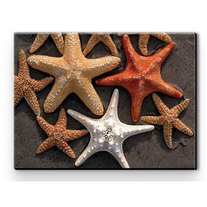 I Sea Life Starfish Photographic Print on Wrapped Canvas by Rightside Design