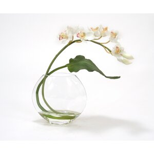 White Cymbidium Orchid with Tropical Leaf in Disk Vase