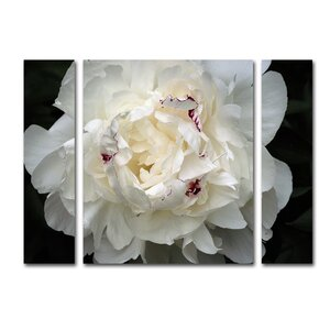 'Perfect Peony' by Kurt Shaffer 3 Piece Photographic Print on Wrapped Canvas Set by House of Hampton