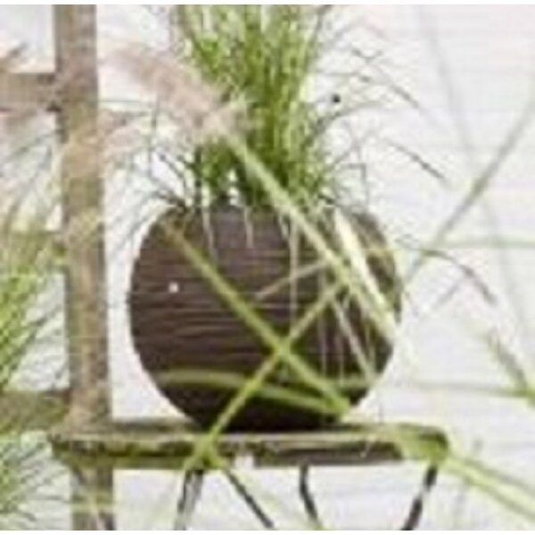 Salses Plastic Pot Planter by Orren Ellis