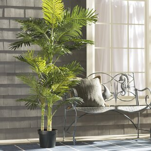 Brookings Floor Palm In Pot By Beachcrest Home