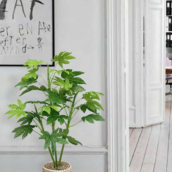 Unpotted Aralia Ficus Plant in Basket by Bay Isle Home