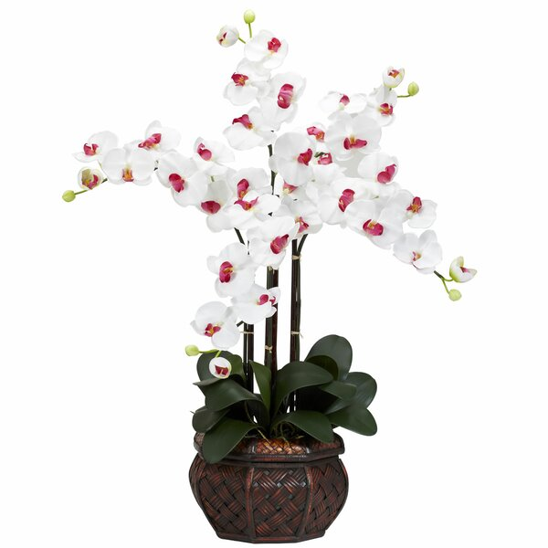 Phalaenopsis with Decorative Vase Silk Flower Arrangement in White by Nearly Natural