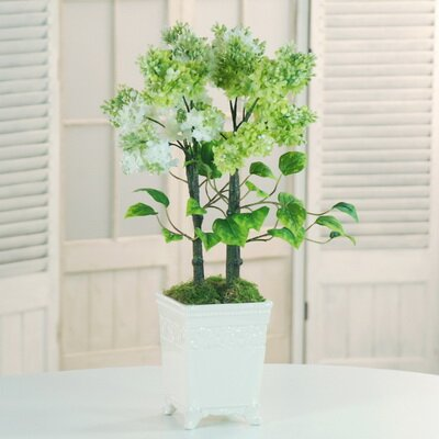 Potted Lilac Desktop Flowering Tree in Planter by Latitude Run