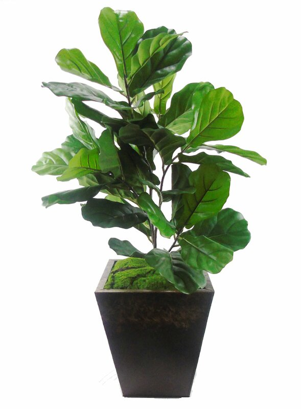 Plante de sol à fougère artificielle en pot