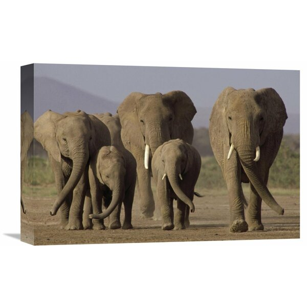 Nature Photographs African Elephant Herd with Calves, Amboseli National Park, Kenya by Gerry Ellis Photographic Print on Wrapped Canvas by Global Gallery