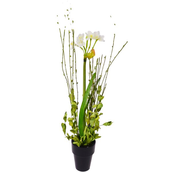 Narcissus Desk Top Plant in Pot (Set of 2) by Charlton Home