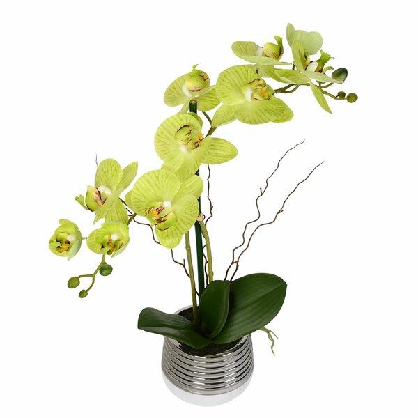 Artificial Phalaenopsis Floral Arrangement in Pot by Bloomsbury Market