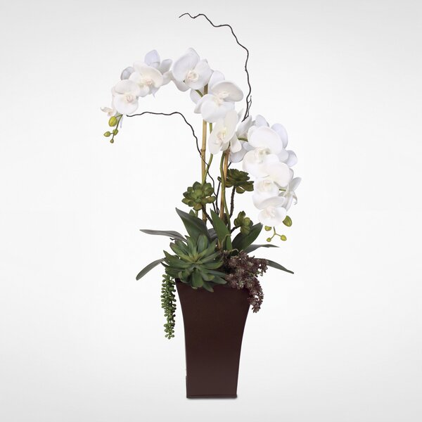 Phalaenopsis Silk Orchids with Succulents Floral Arrangement in Planter by Red Barrel Studio