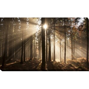 'Autumn Morning in Forest' Photographic Print on Wrapped Canvas by Picture Perfect International