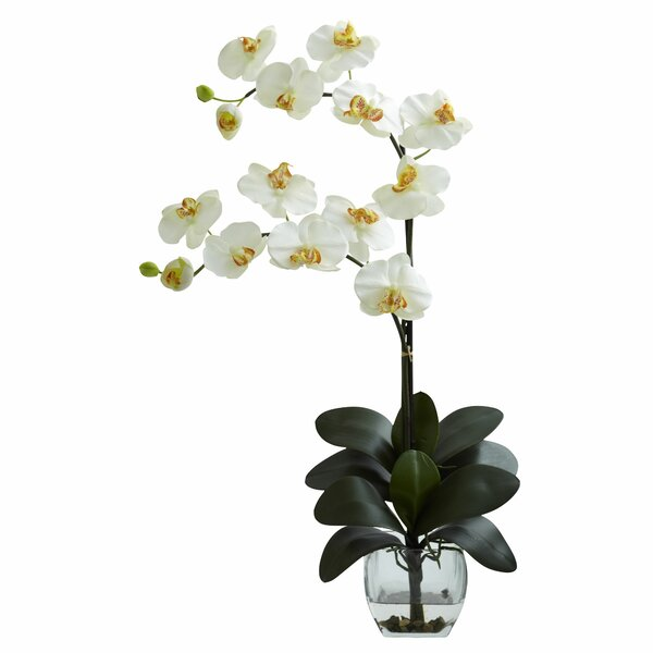 Double Phalaenopsis Orchid in Vase by World Menagerie