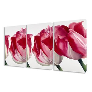 Fresh Pink Tulips 3 Piece Photographic Print Canvas Set by Stupell Industries
