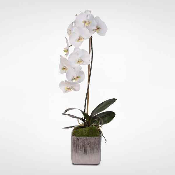 Silk Phalaenopsis Orchid Floral Arrangement in Pot by Orren Ellis