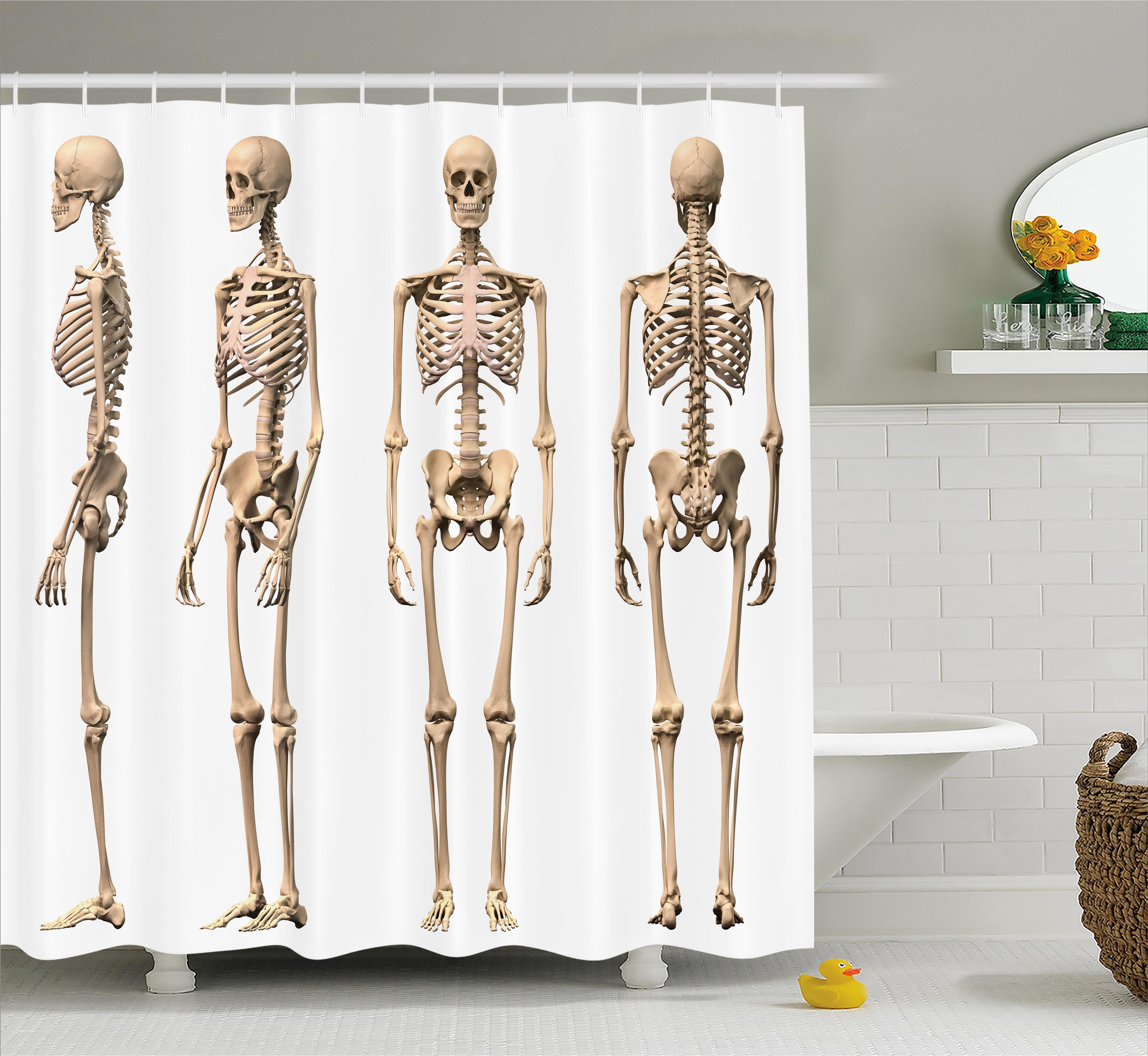 Ambesonne Human Anatomy Man Male Human Skeleton Skull Different