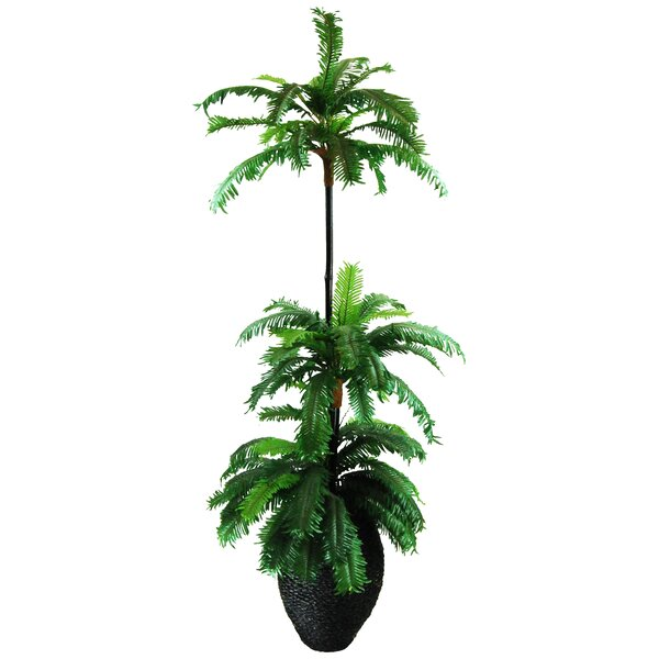Floor Palm Tree in Basket by LCG Florals