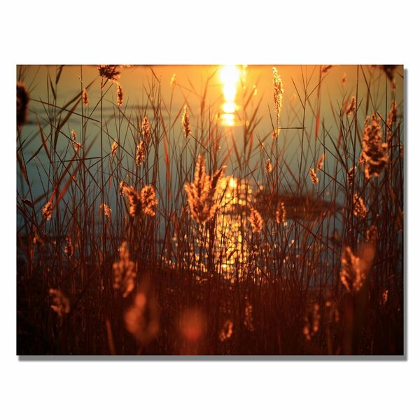 Summer Nights by Beata Czyzowska Young Photographic Print on Wrapped Canvas by Trademark Fine Art
