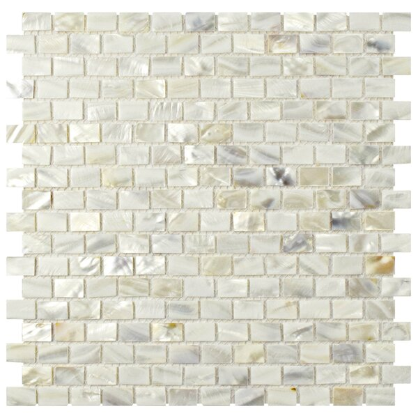 Shore 1 x 1 Seashell Mosaic Wall Tile in White by EliteTile