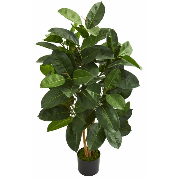 Oak Floor Ficus Tree in Planter by Charlton Home