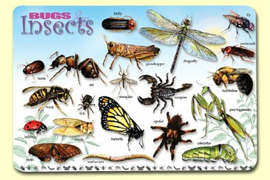Bugs and Insects Placemat (Set of 4) by Painless Learning Placemats