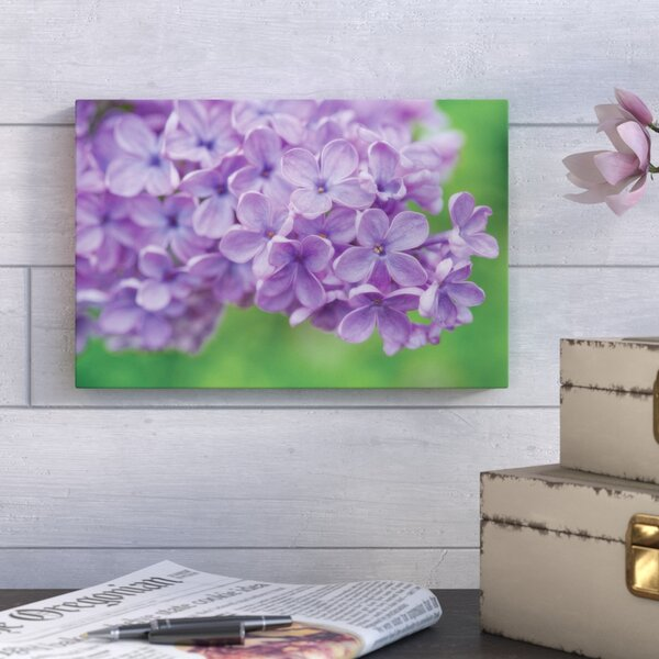 Lilac II Photographic Print on Wrapped Canvas by August Grove