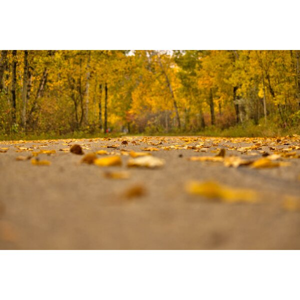 Autumn Road Wall Decal by Ebern Designs