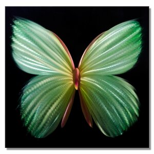 Nova Butterfly Graphic Art Plaque in Green by Metal Artscape