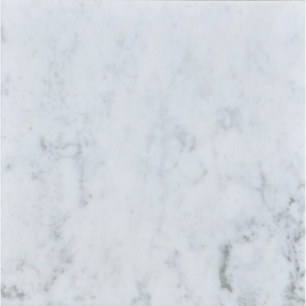 Carrara 12 x 12 Honed Marble Field Tile in White by The Bella Collection