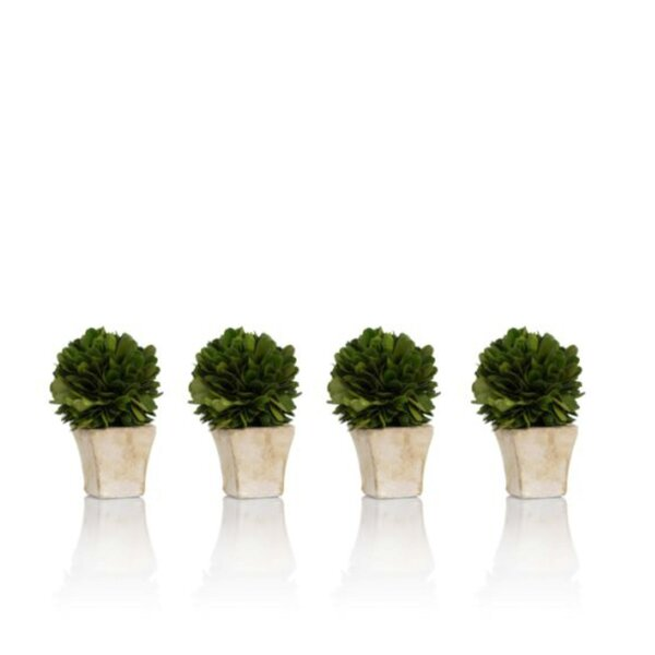 4 peice Preserved Boxwood Desktop Topiary in Planter Set (Set of 4) by Ophelia & Co.