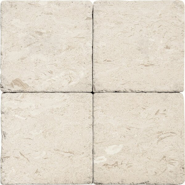 Stone Field 6 x 6  Limestone Field Tile in Fossil Stone Tumbled by Parvatile