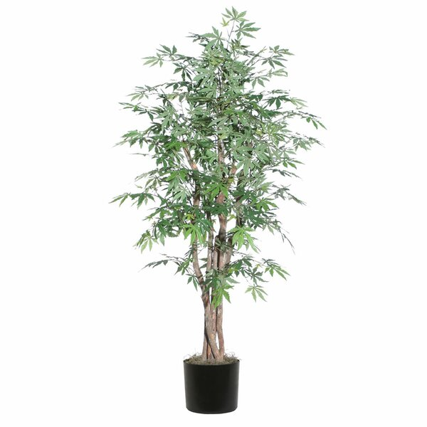 Ridge Fir Japanese Maple Executive Tree in Pot by Vickerman